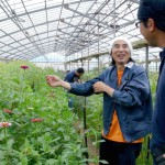 Suki Flower Farm